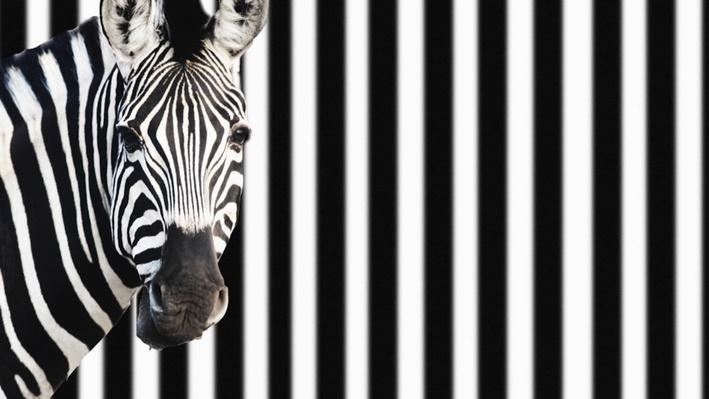 Uncanny: Snot, Zebras, Floaters |  Chroniques insolites