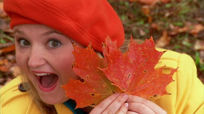 C'est l'automne : Les feuilles d'érable | Les saisons de mini