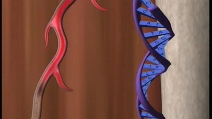 Scientific American Frontiers: 21st Century Medicine   Bypass Genes Therapy