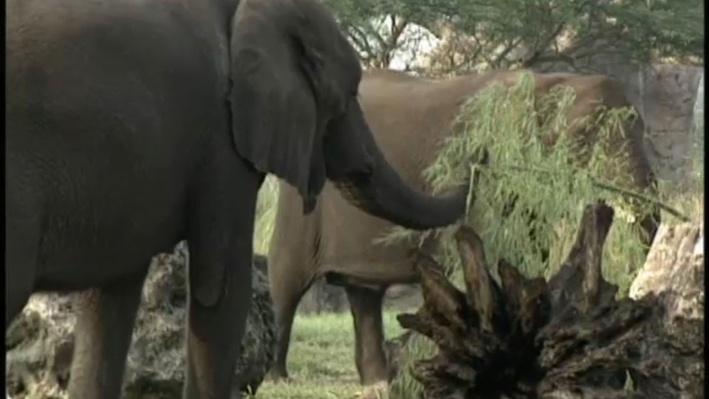 Scientific American Frontiers: Calls of the Wild, Elephant Rumbles | Rumbles
