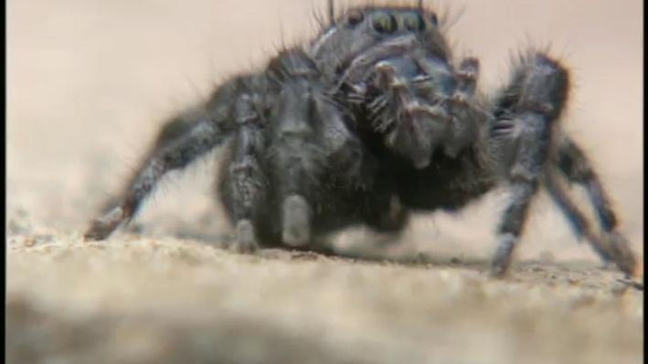 Scientific American Frontiers--Calls of the Wild, A New Way to Hear - Spiders