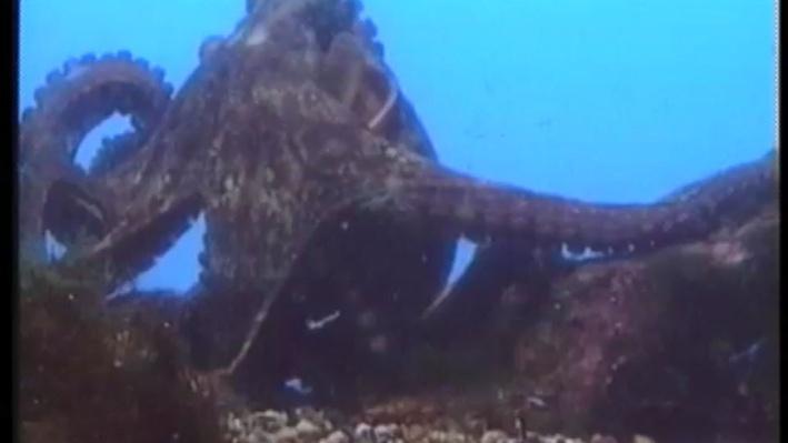 Scientific American Frontiers: Creatures of the Deep | Spineless but Smart