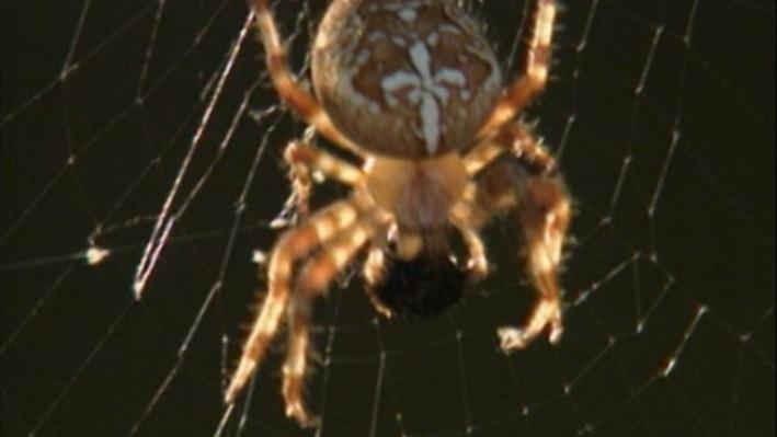 Scientific American Frontiers: Spiders   Spin, Spin, Spin