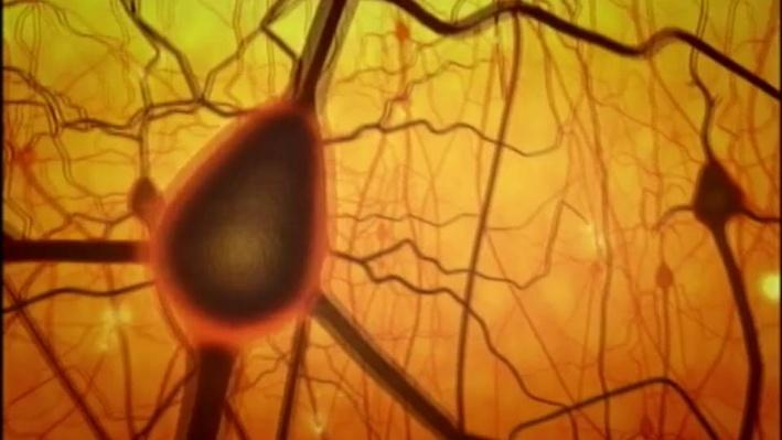 The Secret Life of the Brain, Part 3 | Adolescence and the Prefrontal Cortex