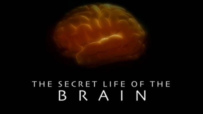 The Secret Life of the Brain, Part 4