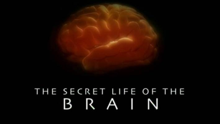 The Secret Life of the Brain, Part 5