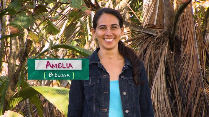 SciGirls | Dra. Amelia Merced: Bióloga / Biologist