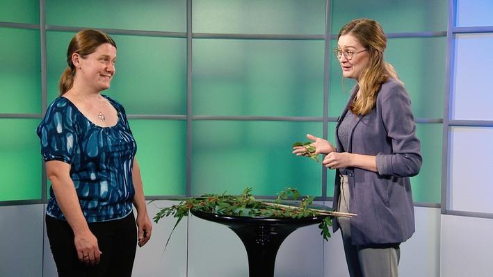 Spot on Science   Invasive Plants