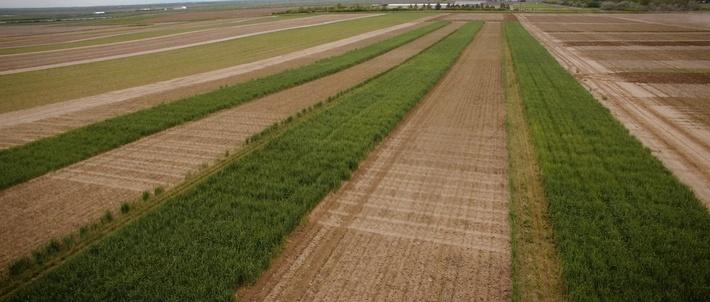 MREDI Crop Yield