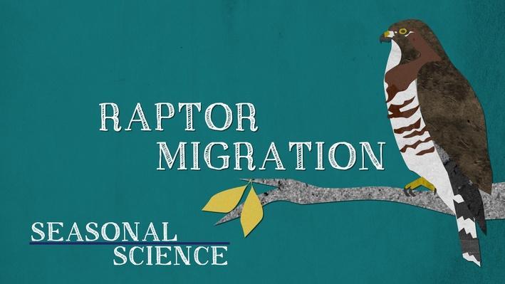 Seasonal Science: Raptor Migration