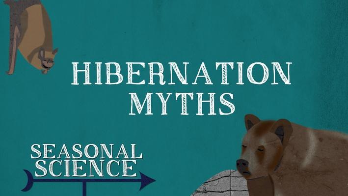 Seasonal Science: Hibernation