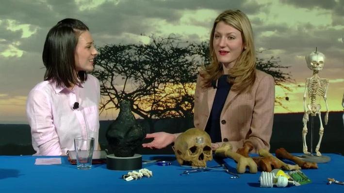 How Bones Reveal Environmental Health | Smithsonian Science How