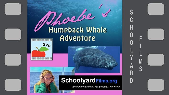 Phoebe's Humpback Whale Adventure