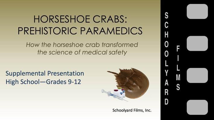High School Supplement Horseshoe Crabs