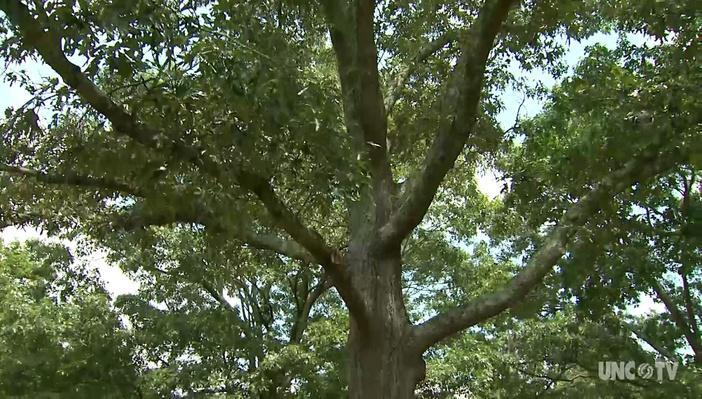 Root Video