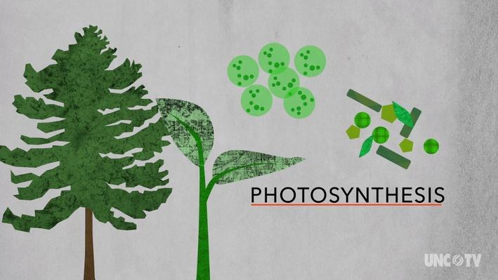 Photosynthesis Animation