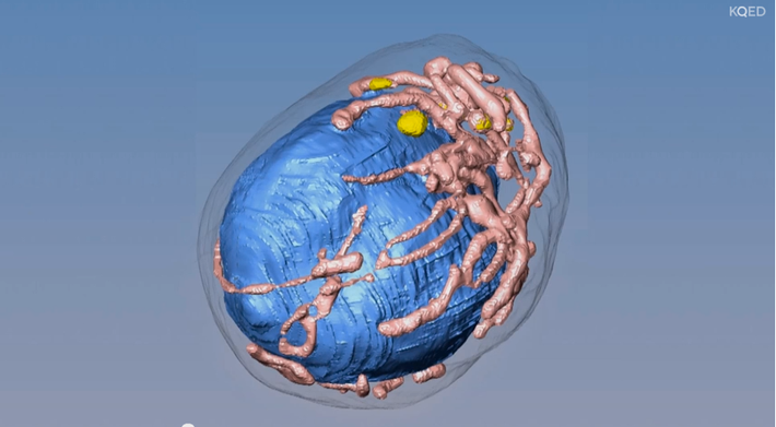 X-ray Microscope: Seeing Cells in 3D
