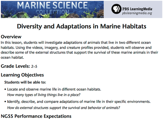 Diversity and Adaptations in Marine Habitats
