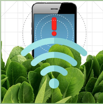 Could Spinach Be Used to Detect Bombs?