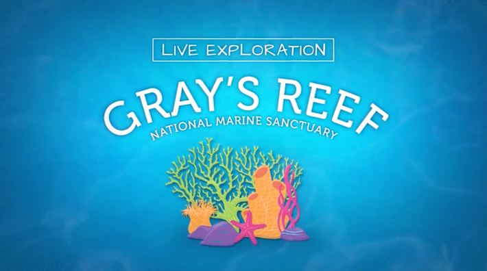Gray's Reef National Marine Sanctuary | Live Exploration