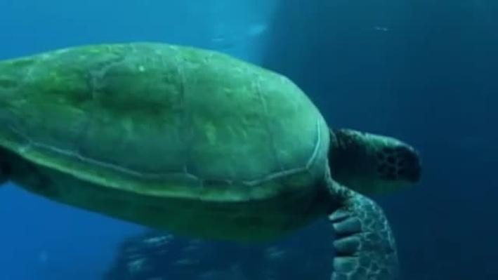 Saving A Species: Sea Turtles