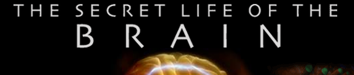 EEG | Secret Life of the Brain