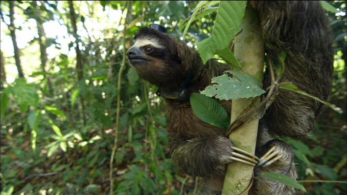 Sloth Sleep Study
