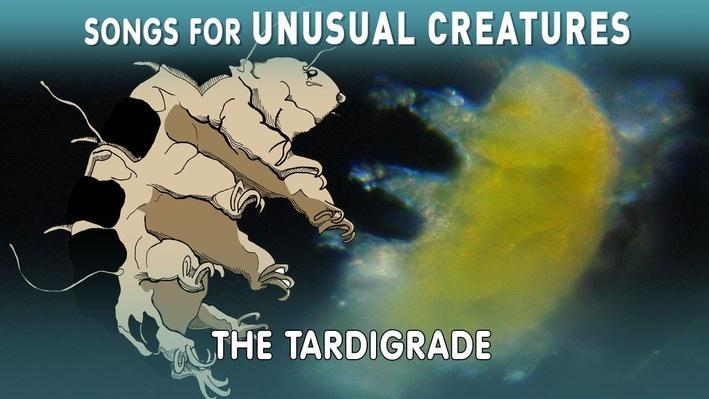 Hunting For Tardigrades! | Songs for Unusual Creatures