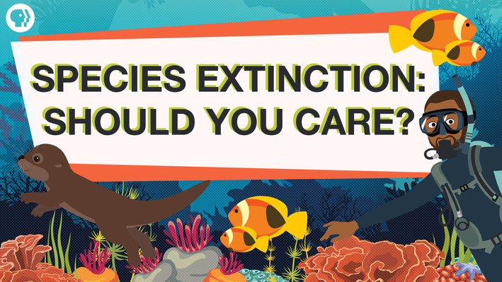 "An illustration of sea life with a banner that reads ""Species Extinction: Should You Care?"""