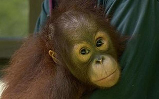 Virtual Field Trip: Borneo | Video