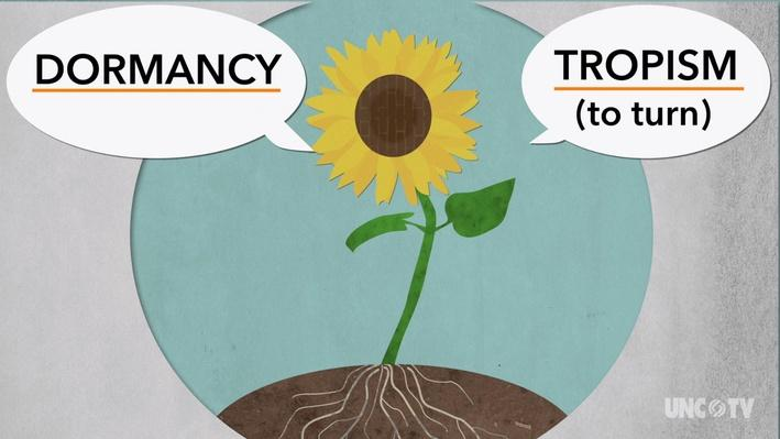 Tropism and Dormancy Animation