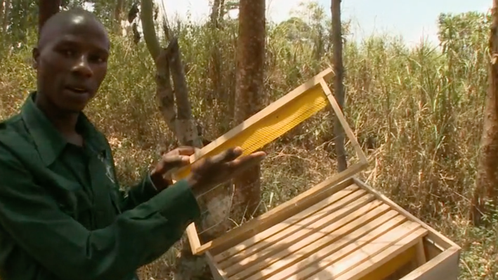 Uganda: Sustainable Tourism | Beekeeping and Tree Plantation Project