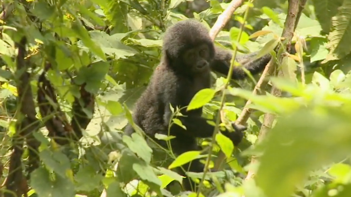 Uganda: Sustainable Tourism | Ruhija Gorilla Camp