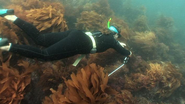 SciGirls | Underwater Eco-Adventure 03: Data Collection