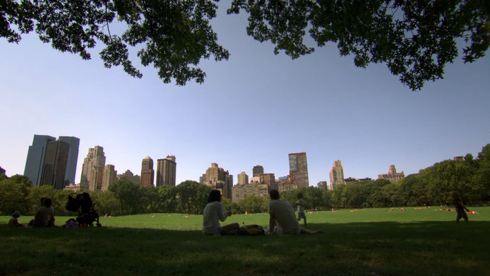 Urban Trees: Video | Nature Works Everywhere