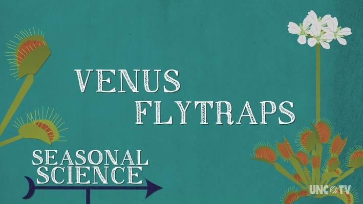 Seasonal Science: Venus Flytrap