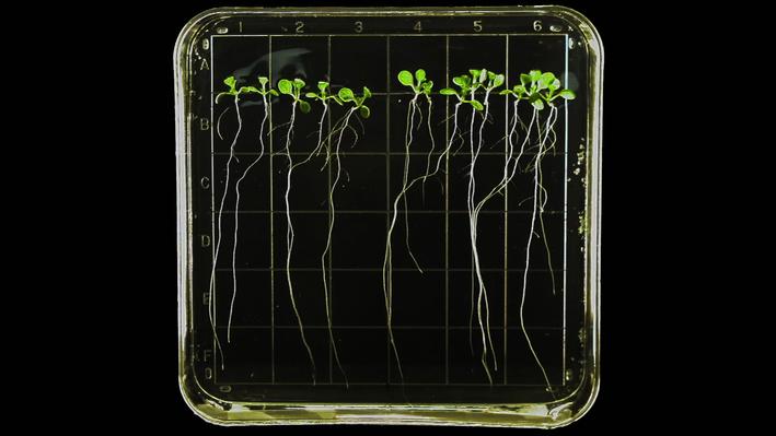 Harvesting Plants in Space