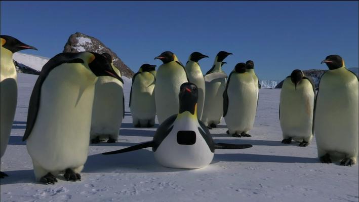 The Spy Penguin