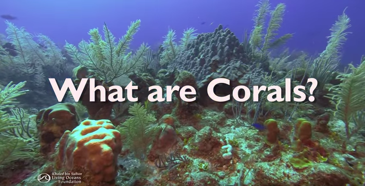 What are Corals?