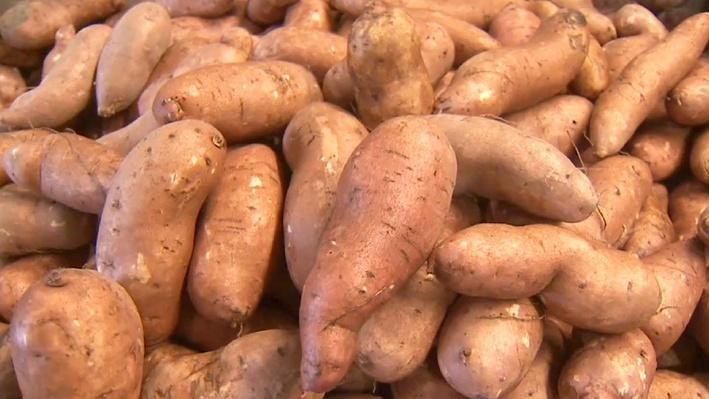 Family Sweet-Potato Farm | America's Heartland