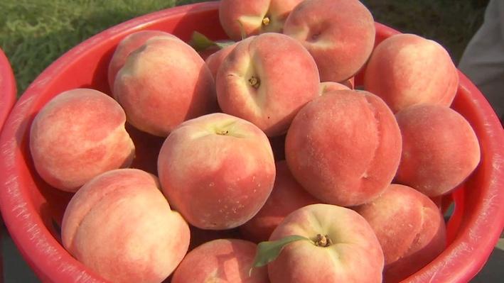 Family Peach Farm | America's Heartland
