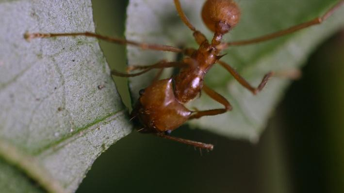 Nature Nuggets: Ants Go Marching