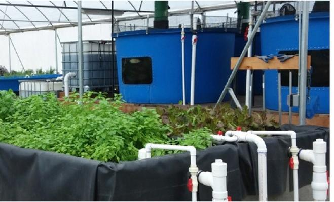 Aquaponics--Farming the Future