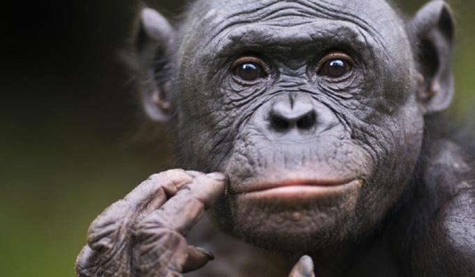Social Skills: Kids vs. Apes