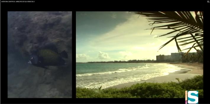 Aventura Científica: Arrecifes de Isla Verde Seg 3