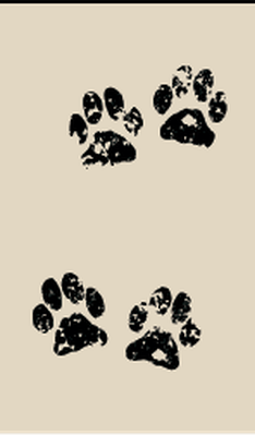 Skunk, Bobcat, Raccoon | Clipart