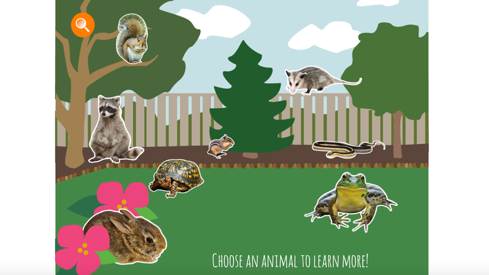 Backyard Wildlife | Interactive | Everyday Science