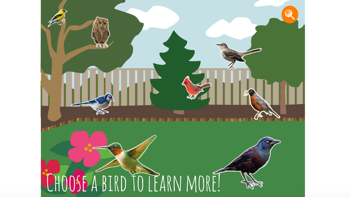 Backyard Birds | Everyday Learning