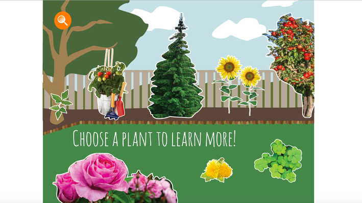 Backyard Plants | Everyday Learning