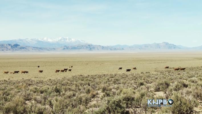 Nevada's Iconic Landscape